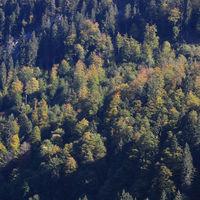 Colorful autumn scene near Innerthal, Switzerland.