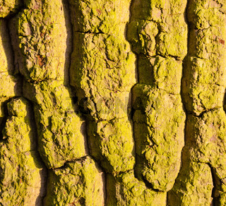 Texture pattern of mossy tree trunk