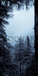 Autumn forest in mist