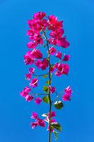 Santa Rita Flower Over Blue Sky