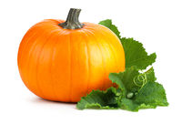 Pumpkin With Green Leaves Isolated On White