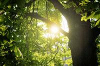 Tree Sun