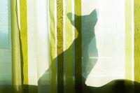 Black cat shadow on window