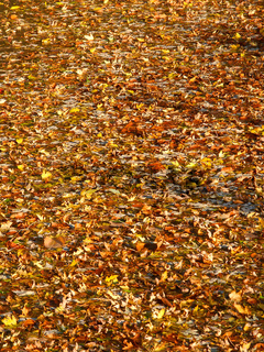Floating Leaves Background