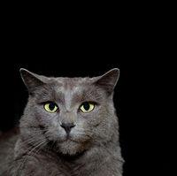 Grey cat on black background