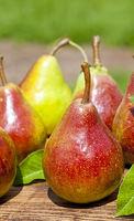 Autumn fresh pear over old wood board