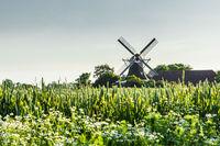 Windmill Seriemer Muehle in rural landscape, East Frisia, Lower Saxony, Germany