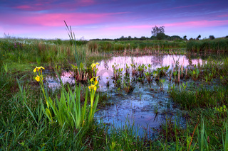 yellow flowers by lake at dramatic sunset