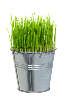 Green grass in a small metal bucket