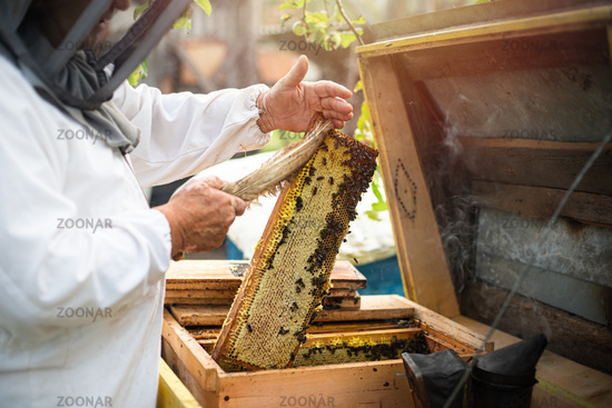 Beekeeper obtaining honey, raising the wax honey from the hive. Apiculture and hobby.