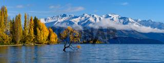 Panorama of Wanaka tree and Lake Wanaka in autumn, New Zealand