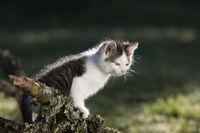 Cat, kitten on branch in the back-light