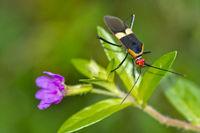 Shield Bug, Corcovado National Park, Costa Rica