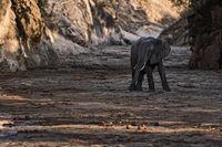 Elephant in a Canyon, Zimbabwe.