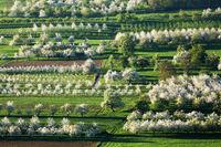fruit growing area in the Eggener valley