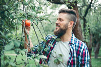 Man pick apple from tree