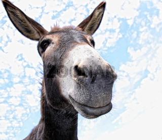 lächelnder Esel