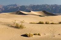 Mesquite Flat Sand Dunes 3,