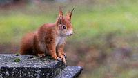 Eichhörnchen 65