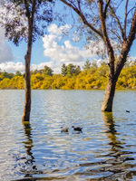 Athalassa Lake, Cyprus with beautifully lit water, and trees on a beautiful sunny afternoon