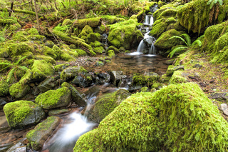 Cascades and small pools in a stream.