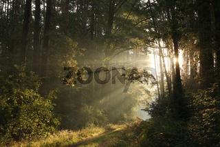 Autumn forest during sunrise