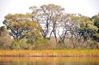 Okavango Wetlands, Okavango Delta, Botswana