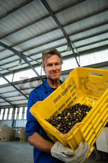 Portrait of worker holding a crate of harvested olive