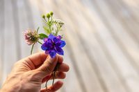 A small plucked flower held by a person.
