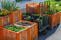 Flower and vegetable beds