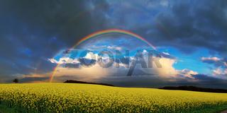 Regenbogen über einem Rapsfeld