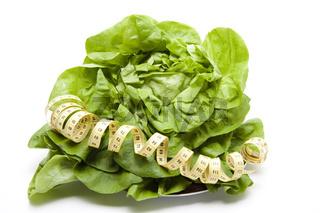 Salatkopf mit Maß band