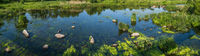 Small picturesque rushy pond on river. Sunny, summer day on Ros river, Boguslav, Ukraine.