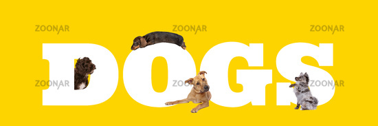 A group of four dogs around white letters written dogs