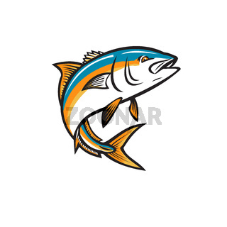 California Yellowtail Amberjack Forktail Mossback Yellowtail Tunis or Seriola Dorsalis Ray-Finned Fish Jumping Up Retro Style