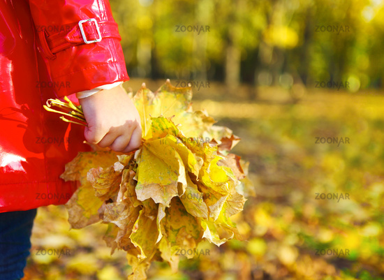 little girl holding autumn leaves in the beauty park