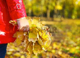 little girl holding autumn leaves in the beauty park