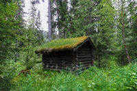 small wooden cabin with a moss-covered roof in the middle of the forest