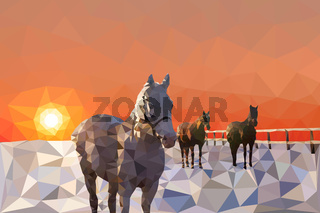 The horses in the corral walk sunset or sunrise