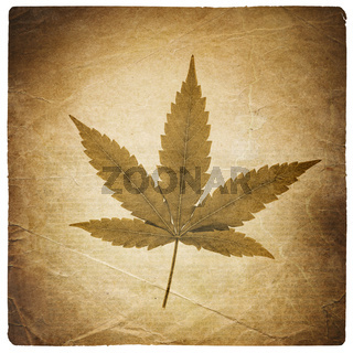 Cannabis leaf. Vintage background with torn edges. Isolated on white