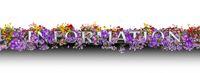 Floral Information lettering