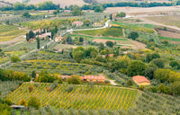 Rows of pruned bare grape vines early autumn with cottage houses in Tuscany area in Italy