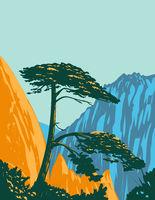 Pinus Hwangshanensis or Huangshan Pine on Huangshan Mountains in Anhui Province China WPA Poster Art