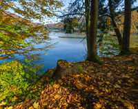 Forest meadow on shore of picturesque lake. Vilshany water reservoir on the Tereblya river, Transcarpathia, Ukraine. Beautiful autumn day in Carpathian Mountains.