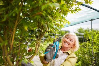 Gärtnerin beim Pflanzen Rückschnitt im Gewächshaus