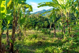 Landschaft in Ketambe im Süden des Gunung Leuser Nationalparks