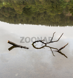 Reflection of branch in Coniston Water