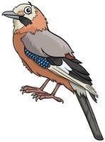 cartoon jay bird comic animal character