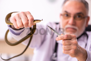 Aged male doctor holding snake in the clinic