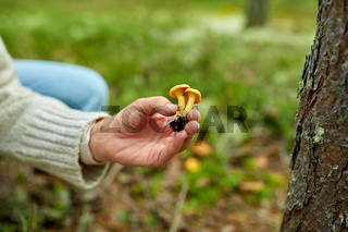 young woman picking mushrooms in autumn forest
